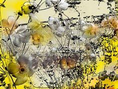 anemone – VIMESO picture services
