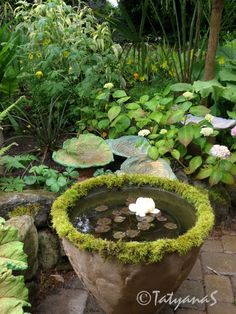 ponds are not a 'no-no' for a small garden. ponds are not a 'no-no' for a small garden. Moss Garden, Garden Art, Garden Design, Landscape Design, Ponds For Small Gardens, Small Ponds, Backyard Water Feature, Garden Fountains, Garden Ponds
