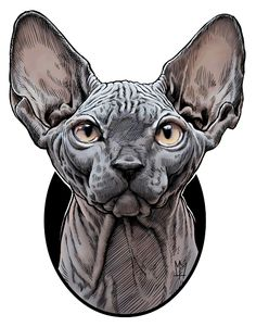 Sphynx by mark matlock, via Behance