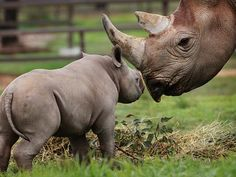 A touching moment between mother and son at Taronga Western Plains Zoo in Dubbo. Picture: