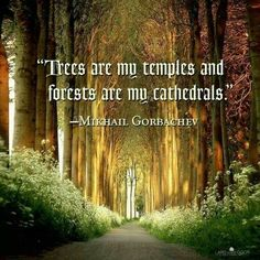 """""""Trees are my temples, and forests are my cathedrals."""" ~Michael Gorbachev ★❤★ Source by Mother Nature Quotes, Nature Sayings, Mikhail Gorbachev, Pantheism, Forest Bathing, My Church, Amazing Nature, Mother Earth, Temples"""