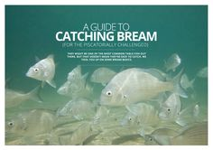 A Guide to Catching Bream — UNSEALED 4x4