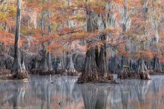 Fall on the Bayou by David Chauvin on 500px