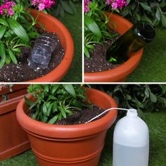 Keep Your Plants Happy And Hydrated With These 3 Self-Watering Hacks I just got a lot of energy from the plant ㅎㅎ I will always be careful not to dry up! 3 Self-Watering Hacks For Plants Indoor Garden, Garden Plants, Indoor Plants, House Plants, Potted Garden, Big Garden, Garden Bed, Potted Plants Patio, Garden King