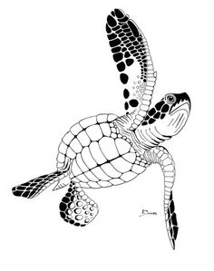 tribal sea turtle tattoos *idea for my mom :) Turtle Outline, Sea Turtle Art, Sea Turtles, Tribal Turtle Tattoos, Animal Tattoos, Ocean Tattoos, Animal Stencil, Stencil Art, Arte Tribal