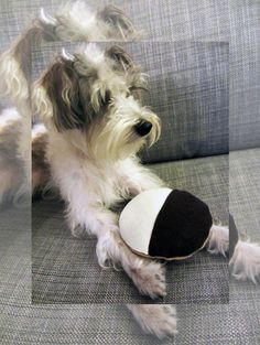 Ready to ship: NYC B&W Cookie Dog Toy w/ by LittleBarkster