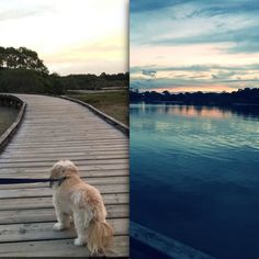 Lovely afternoon walk with my puppy :) #afternoonwalk #gettingfit #currumbinbeach #amazingsunset #exercise #bestfeeling #puppy by braideeee http://ift.tt/1X9mXhV