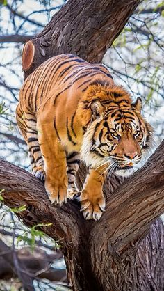 The power, to me, is what I see when I look at this tiger. Just love animals :)