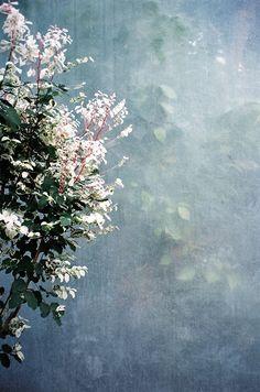 Marcos Rivas photographie plant life