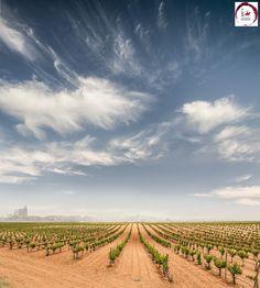 Nuestro país cuenta con un paisaje fundamentalmente vitícola que goza de una riqueza insuperable. El viñedo se integra aquí como si ya hubiese estado desde el origen de los tiempos.
