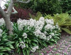 Arthropodium A narrow bed enclosed with concrete ston… - Modern Light Purple Flowers, Small Flowers, White Flowers, Sloped Garden, Garden Beds, Garden Plants, Avalanche, Endless Summer Hydrangea, Small Front Gardens