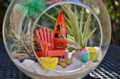 Beach Terrarium Kit ~ 2 AirPlants ~ Beach Decor ~ Beach Chair ~ Surfboard ~ Beach Bag ~ Palm Tree ~ Shells ~ Hanging Glass Terrarium ~ Gift by BeachCottageBoutique on Etsy