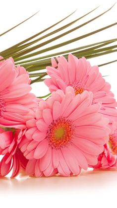 Download Wallpaper 720x1280 Gerbera, Flowers, Bouquet, Pink, Green Samsung Galaxy S3 HD Background