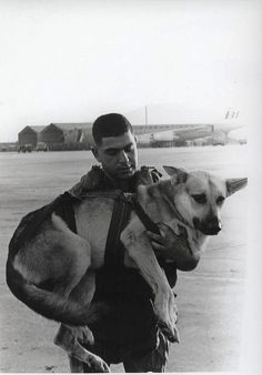 Sgt. Spano and Lobo, Da Nang, Vietnam, August 1968 - One of a series of official Marine Corps photographs of Sgt. Spano and his War Dog Lobo completing a parachute jump in Da Nang, Vietnam, August 1968. War dogs were not returned from Vietnam, but were killed when not useful. May God forgive us.