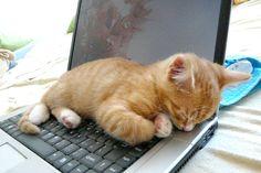 画像 : 【猫】ネコに関する偉人達の格言・名言集 - NAVER まとめ