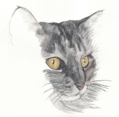 cat watercolor painting - maine coon - alice. $50.00, via Etsy.