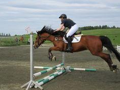 varmblods omskolert hest til salgs/eventuelt foravtale for en periode Ads, Horses, Animals, Dressage, Period, Animales, Animaux, Animais, Horse