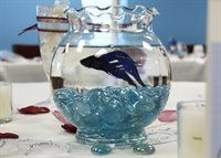 betta fish centerpiece - maybe a little bit bigger of a jar would make a perfect centerpiece!