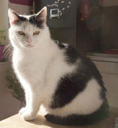 Fika Cat | Pawshake