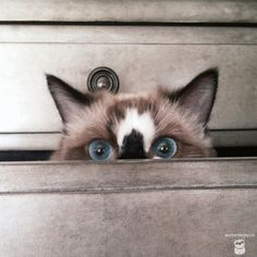 WHEN EVER MY CAT WAS GONE FOR ANY LENGTH OF TIME, WE STARTING LOOKING IN ALL THE DRAWERS -- WHERE WE USUALLY ALWAYS FOUND HER FAST ASLEEP……..ccp