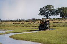 Water activity at Jao Camp, Botswana