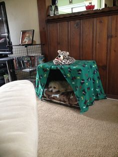 Gleason in the converted crate bed...