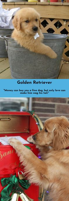 Simply click the link to find out more Golden Retrievers Just click on the link to get more information...