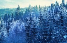 woodland-frost-forest-plain