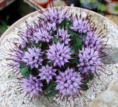 Flores Raras – Paisagismo Legal