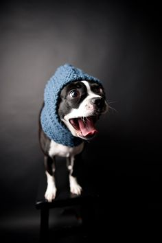 {Blue Knitted Dog Snood} totally want my dog to wear this, even though I know she would never let me put it on her