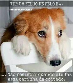 EU NÃO RESISTO! <3 <3 <3 #petmeupet #cachorro #filhode4patas #maedecachorro #maedepet #paidecachorro #caopanheiro #cachorroetudodebom #amocachorro