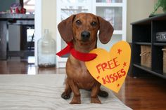 Happy Valentine's Day Friends - Ammo the Dachshund