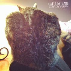 Catladyland: Cats are Funny: Hide Your Haunches!