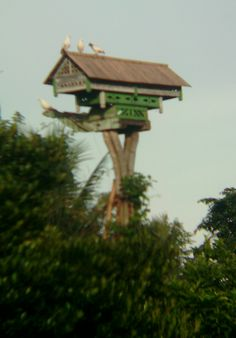 Freshgreen traditional dovecote of East Java  #dovecote #pigeonhouse #rumah merpati #بيت_الحمام #برج_الحمام