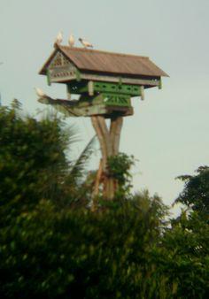Freshgreen traditional dovecote of East Java  #dovecote #pigeonhouse #rumah merpati #بيت_الحمام #برج_الحمام