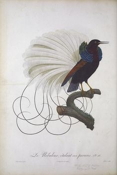 beautiful collections at the BioDiversity Heritage Library