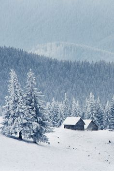 Carpathian Mountains - Ukraine