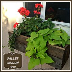 Build a flower window box from an old PALLET