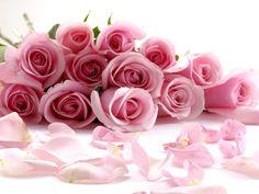 pink roses: 31 тыс изображений найдено в Яндекс.Картинках