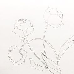 Guys, the peonies in our yard are about to pop! When I get tired of drawing theses delicate blooms, I'll let ya know (but don't hold your breath ) Simple Flower Drawing, Peony Drawing, Floral Drawing, Painting & Drawing, Drawing Step, Art Floral, Botanical Line Drawing, Botanical Drawings, Flower Drawings