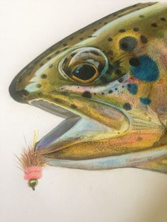 How to Draw Trout With Colored Pencils