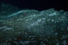 Towering carbonate rocks rise hundreds of feet off the seafloor at Hydrate Ridge off the coast of Oregon.