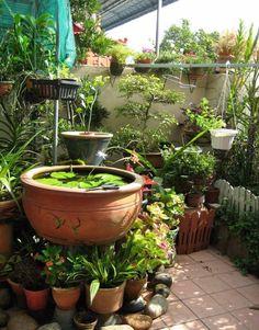Wasserlilien brauchen etwas mehr Raum