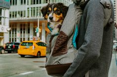 🎉Welcome to Cyber Monday! Head over to Kurgo.com for deals on car protection, harnesses, adventure gear, and more. Don't wait, these deals end tonight!🎉 Dog Harness, Dog Leash, Dachshund, Spiderman, Biking With Dog, Gatos Cats, Hiking Dogs, Dog Activities, Dog Travel