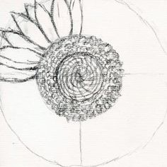 how to draw a sunflower, realistic sunflower step 4