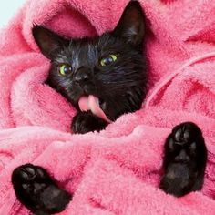 Cat Care Keeping Your Cat Healthy - Cat's Nine Lives Pretty Cats, Beautiful Cats, Little Kittens, Cats And Kittens, Ragdoll Kittens, Tabby Cats, Bengal Cats, White Kittens, Cat Bath