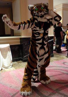 TFF 2016- Taj the tiger