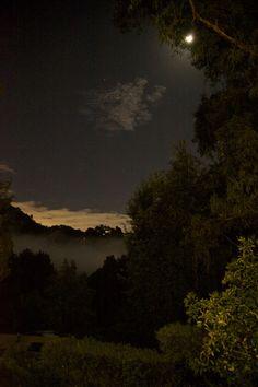 seeloveyou: Last night's mist
