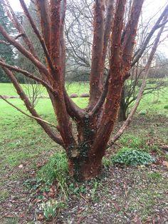 Painswick Rococo garden January