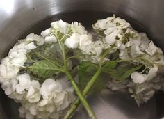 For cheerful, long-lasting hydrangeas, cut stems diagonally, snip off water-guzzling leaves and fully submerge the blooms in ice-cold water for 4-6 hours before arranging.